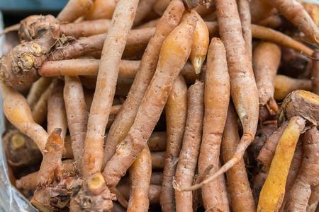 finger root Standard-Bild