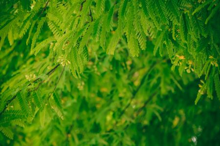 assort: vintage tone of green nature background, Nature leaf. Stock Photo