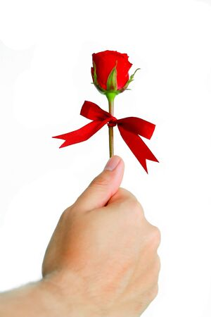 red hand: human hand holding red rose isolated on white background.