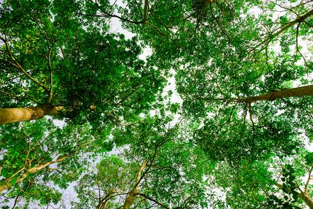 Natuur groene achtergrond textuur.