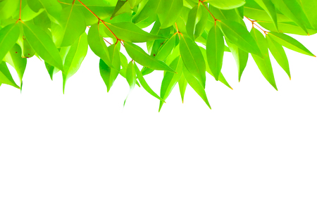 blank space: Green leaf background on the nature with blank space for insert your texts.