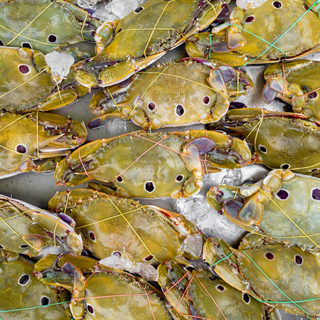 blue swimmer crab: Fresh crab for sell at market Stock Photo