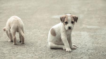 La nourriture affamée de chien en peluche au parc