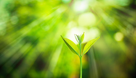 New fresh small plant growth up on green blurred nature with bokeh background under the sunlight