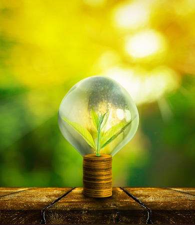 el crecimiento del árbol pequeño fresco en monedas de oro con el fondo enmascarado abstracto fresco naturaleza verde con el bokeh y la luz solar, el concepto de inversión