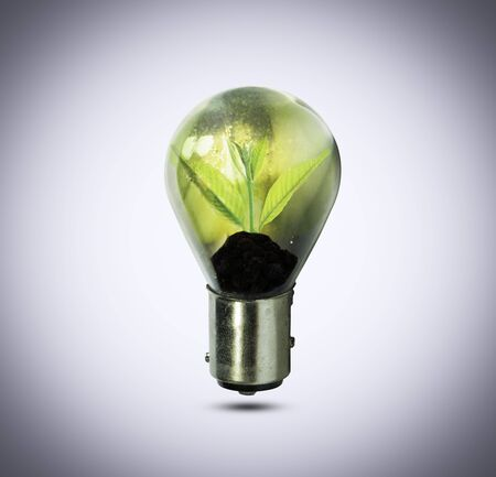 growing inside: Light bulb with small plant growing inside, Eco technology concepts.