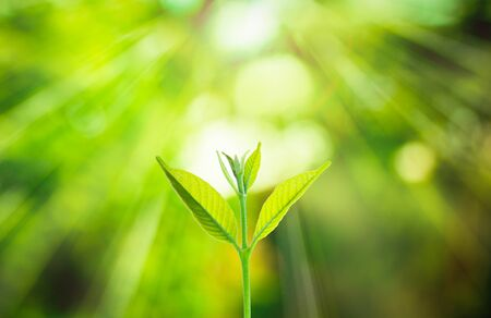 nature of sunlight: Fresh small plant growing on blurred green nature background with bokeh under sunlight at the forest.