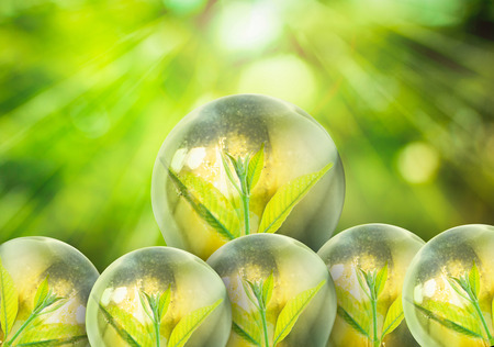 plant nature: Fresh green small plant in light bulb with blurred green nature and bokeh background Stock Photo
