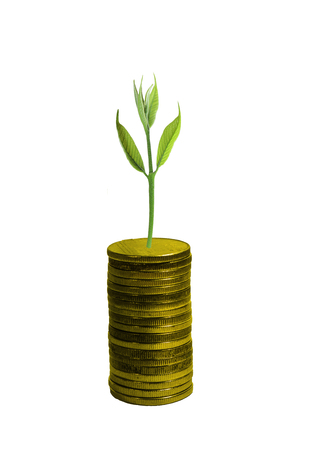 fresh concept: Fresh small tree growth on gold coins on white background, Investment concept. Stock Photo