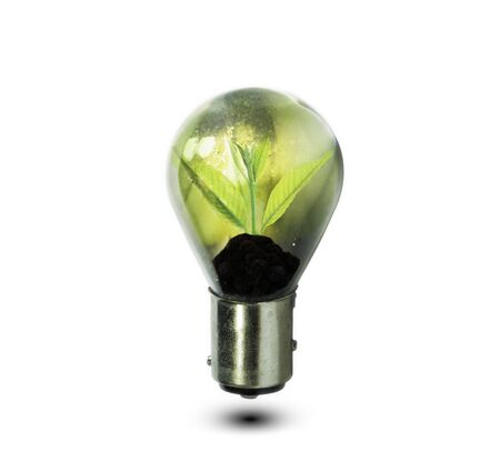 growing inside: Light bulb with small plant growing inside, Eco technology concepts Stock Photo