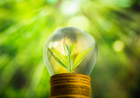 growing inside: Light bulb with small plant growing inside with abstract blurred fresh green nature and bokeh background, Eco technology concepts. Stock Photo