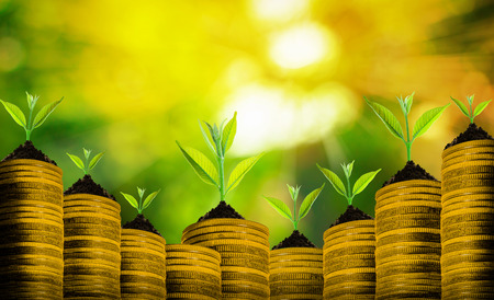plant nature: Group of small fresh plant over many coins with abstract blurred of nature and sunlight bokeh background, investment concepts.