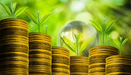 plant nature: Small fresh plant over many coins with abstract blurred of nature and sunlight bokeh background, investment concepts. Stock Photo