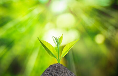 plant nature: Human hand holding fresh small plant with soil on green nature blurred background