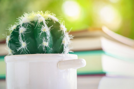 nature of sunlight: Close up cactus in pot with blurred of many book for read and sunlight on nature bokeh background Stock Photo