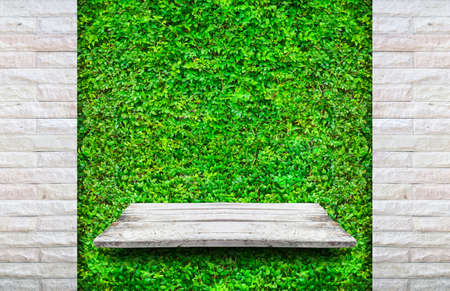Wooden shelves with fresh green small plants and brick background use for products or something display.