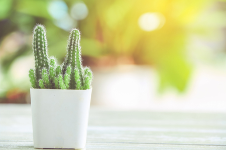Close up cactus in pot with nature blurred background Stock Photo