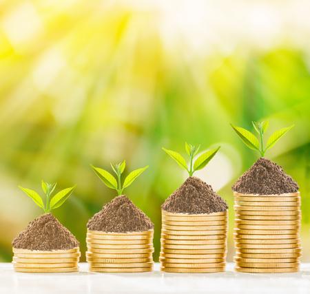 Árbol de crecimiento en monedas de oro con fondo de naturaleza fresca, concepto de negocio. Foto de archivo