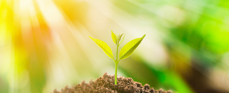De kleine boomgroei op grond met verse groene aardachtergrond en zonlicht Stockfoto