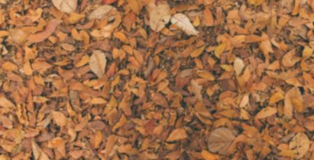 arboles frondosos: Hoja seca en el fondo de la textura de la naturaleza