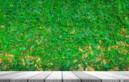 Fresh green plant on cement wall with wooden tabletop use for background