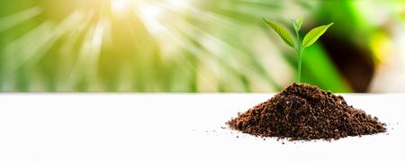 Pequeña planta en el suelo puesto en la mesa de madera con la luz del sol naturaleza borrosa de fondo Foto de archivo - 82054556
