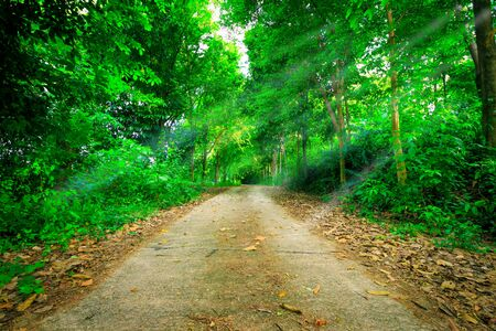 Peaceful park for walking or relax with fresh green nature background and sunlight