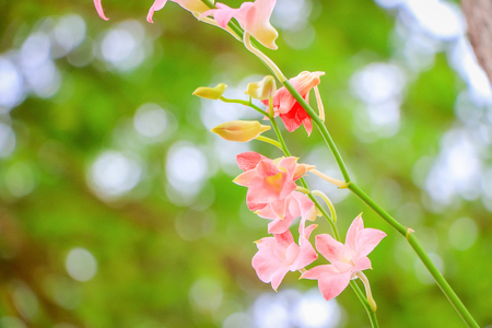 Closeup of orchid flower with fresh green nature blurred background at the park