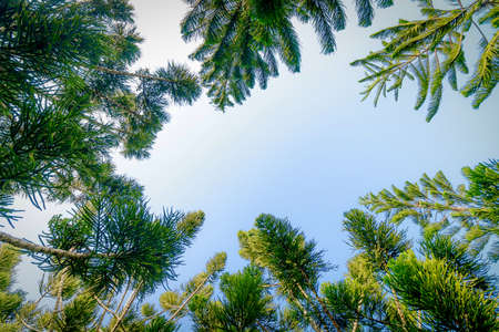 Fresh green tree nature background with sky on sunny day Standard-Bild