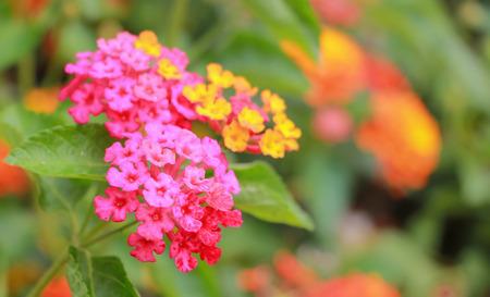 Close up beautiful colorful flowers on nature background Standard-Bild