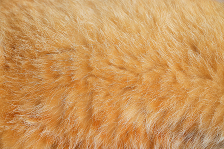 Close up smooth brown cat fur texture background