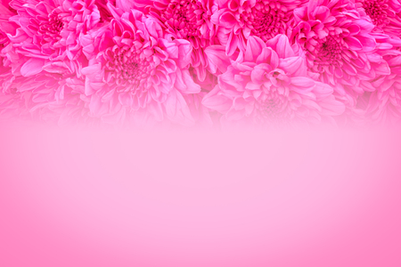 Close up pink rose flowers background with space use for texts or something display on valentine day. Reklamní fotografie