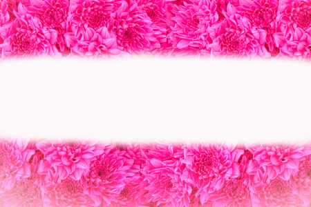 Close up pink flowers background with space use for texts display Reklamní fotografie