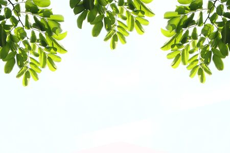 fresh light green leave isolated on white background for spring summer concept with space use for texts display.