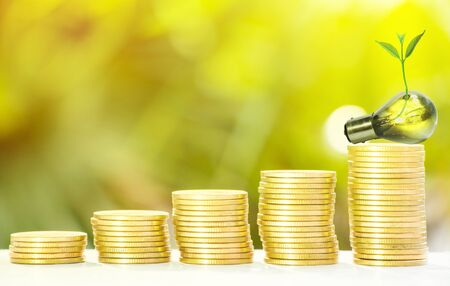 Collect of golden coins with fresh tree growth and bokeh background