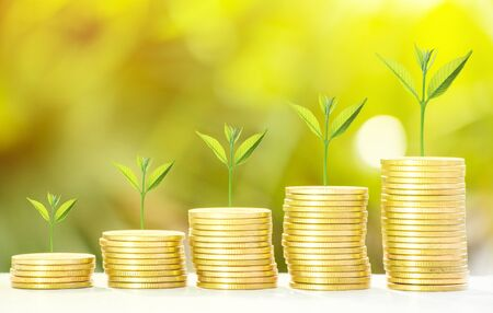 Collect of golden coins with fresh tree growth and bokeh background Reklamní fotografie - 132133987