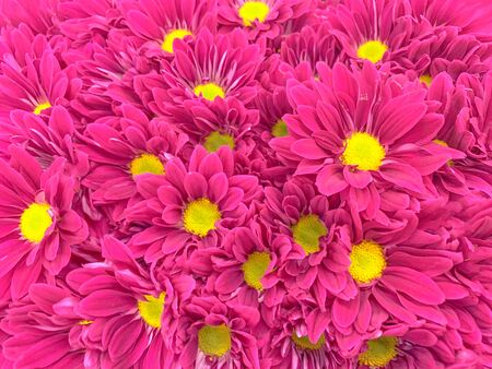 Close up top view of colorful pastel flowers background
