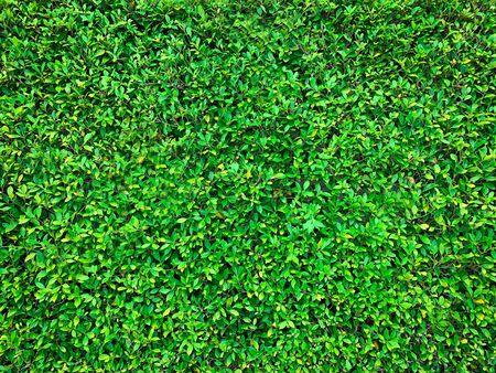 Close up of fresh green grass texture background at the park Standard-Bild