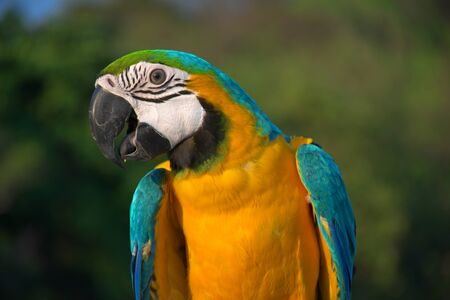Portrait of a parrot