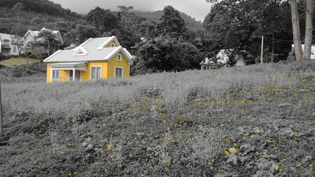 yellow house: Yellow house Editorial