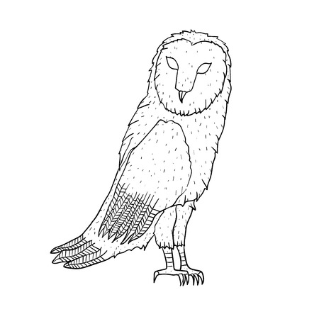eagle owl: Eagle owl. Birds. Black white hand drawn doodle. Vector illustration Illustration
