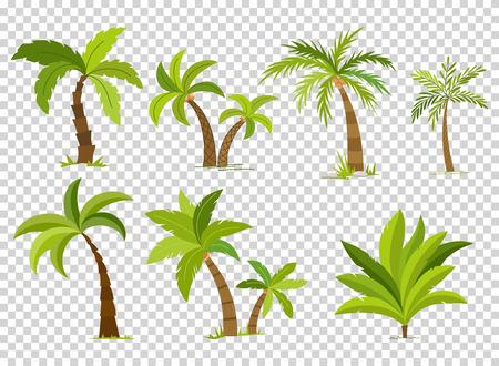 Palm trees isolated on transparent background. Beautiful vectro palma tree set vector illustration Illustration