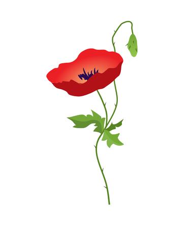 Red Poppy flower isolated on white background, vector illustration