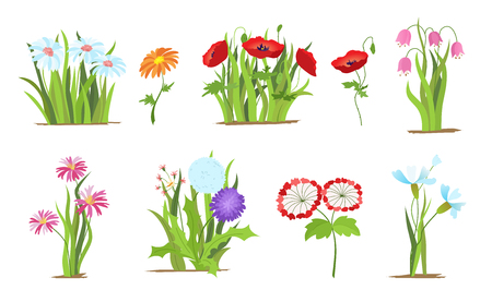 Set of wild forest and garden flowers. Spring concept. Flat vector flower illustration isolate on a white background