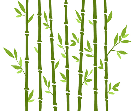Bamboo forest set. Nature Japan, China. Plant Green tree with leaves. Rainforest in Asia Illustration