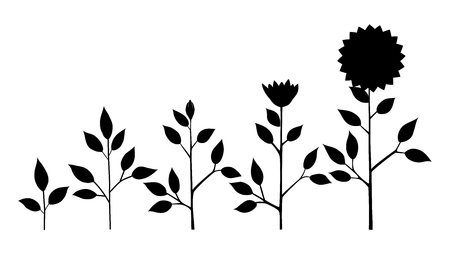 Vector sunflower plant growth stages silhouette, abstract flower symbols isolated on white background. Sunflower life cycle. Flat style Ilustrace