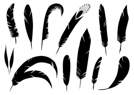 Set di piume dettagliate realistiche, illustrazione vettoriale disegnata a mano, grafica a inchiostro nero isolato su bianco. Elemento decorativo artistico per stampe, carte, motivi, disegni del tatuaggio