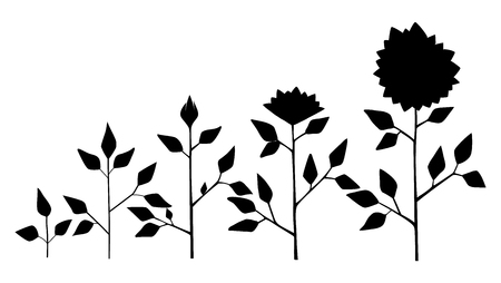 Vector sunflower plant growth stages silhouette, abstract flower symbols isolated on white background. Sunflower life cycle. Flat style Illustration