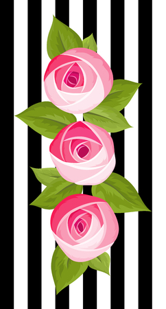 Three vector beautiful flower deep pink rose isolated on strip background