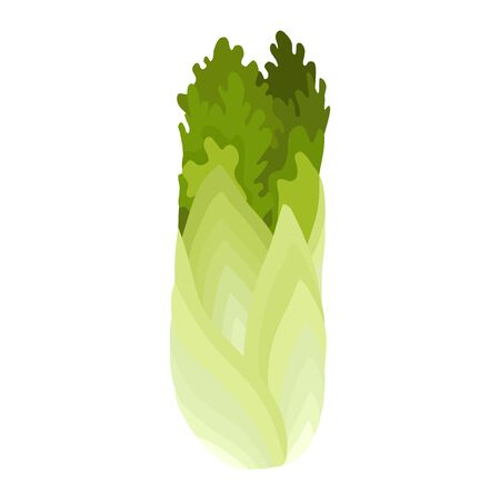 Green fresh salad vegetable and herb, organic vegetarian food, vector illustration isolated on white background. Иллюстрация